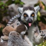 Бельгийский Зоопарк Pairi Daiza