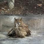 Столичный зоопарк Тегерана