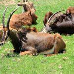 Зоологический парк Претории